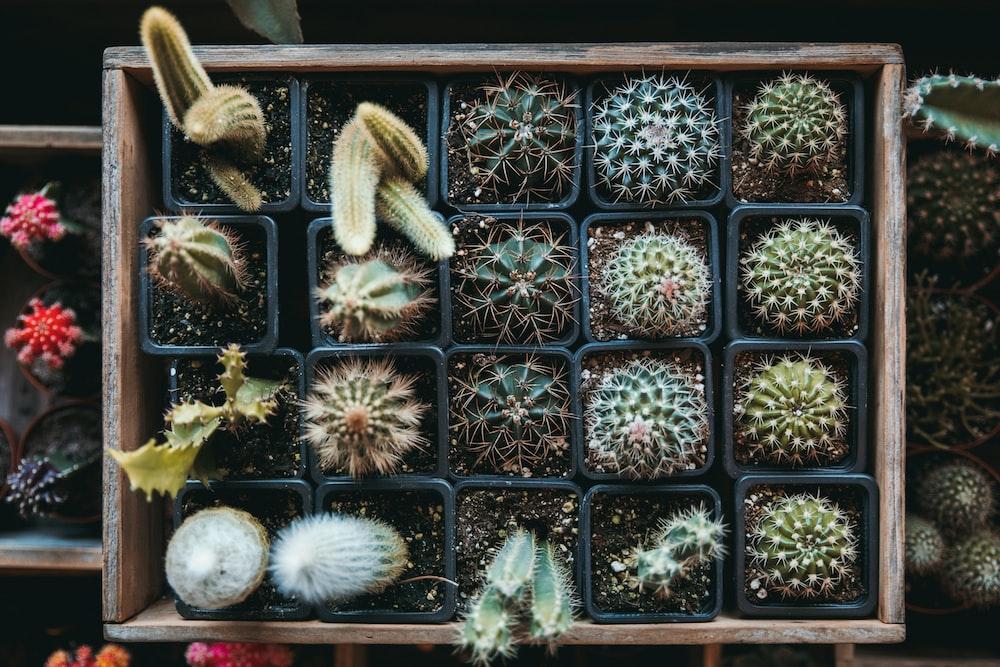 green cacti on brown wooden storage box