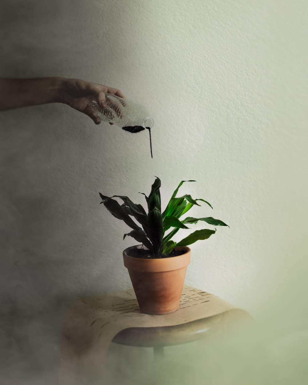 person watering green leafed plant with black liquid
