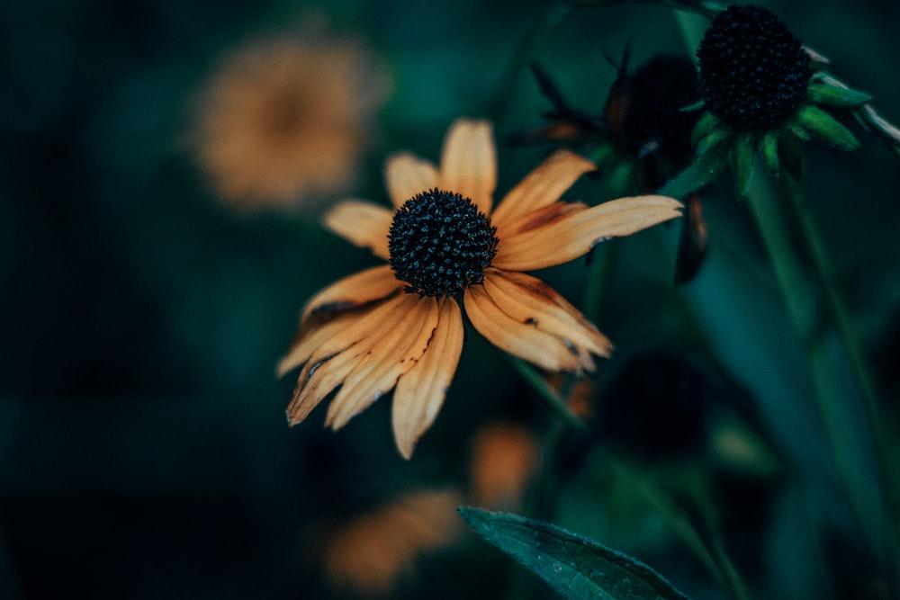 macro shot photography of flower
