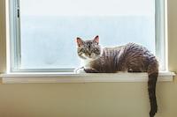 gray cat on window