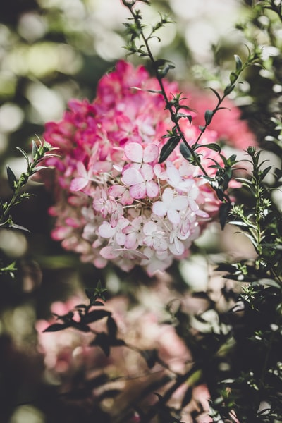 3894. Virágok
