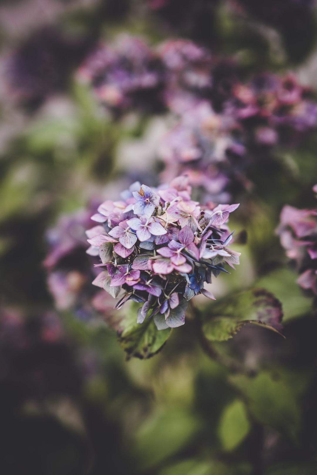 3902. Virágok