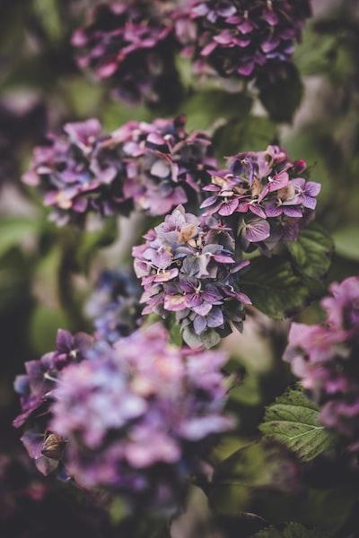 3861. Virágok
