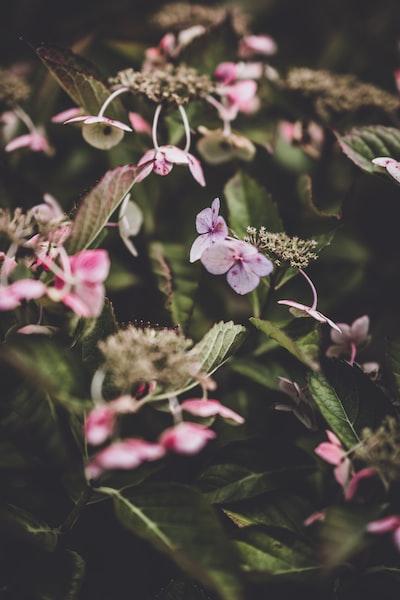 3921. Virágok