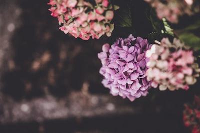 3972. Virágok