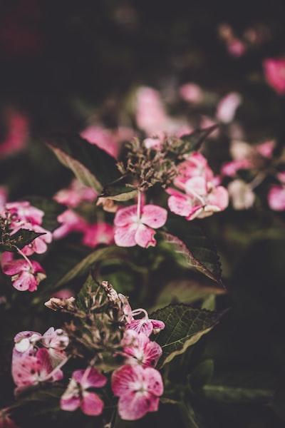 3880. Virágok