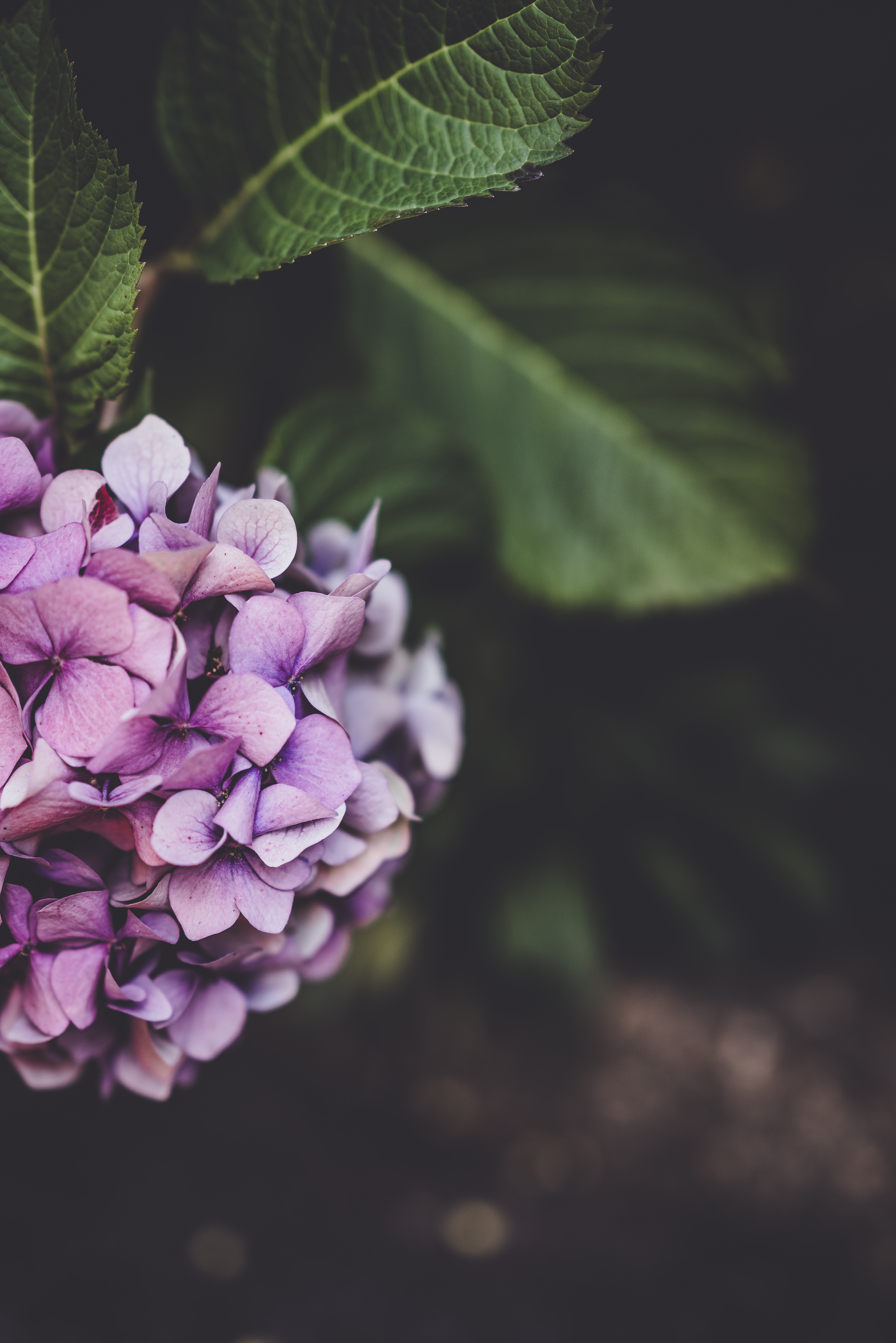 selective focus photography of purple-and-white petaled flowers
