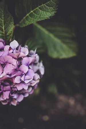 3939. Virágok