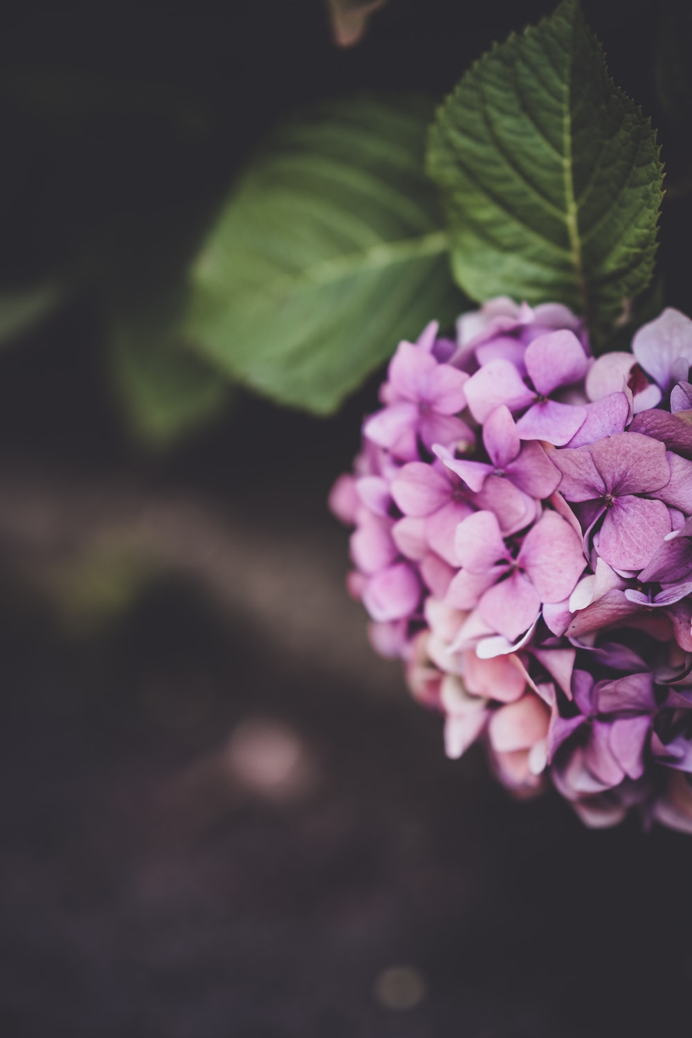 close-up photography of purple petal flowers