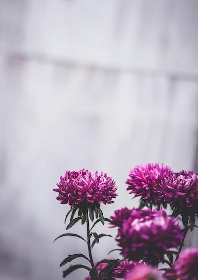 3867. Virágok
