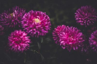 3910. Virágok