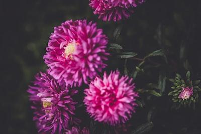 3898. Virágok