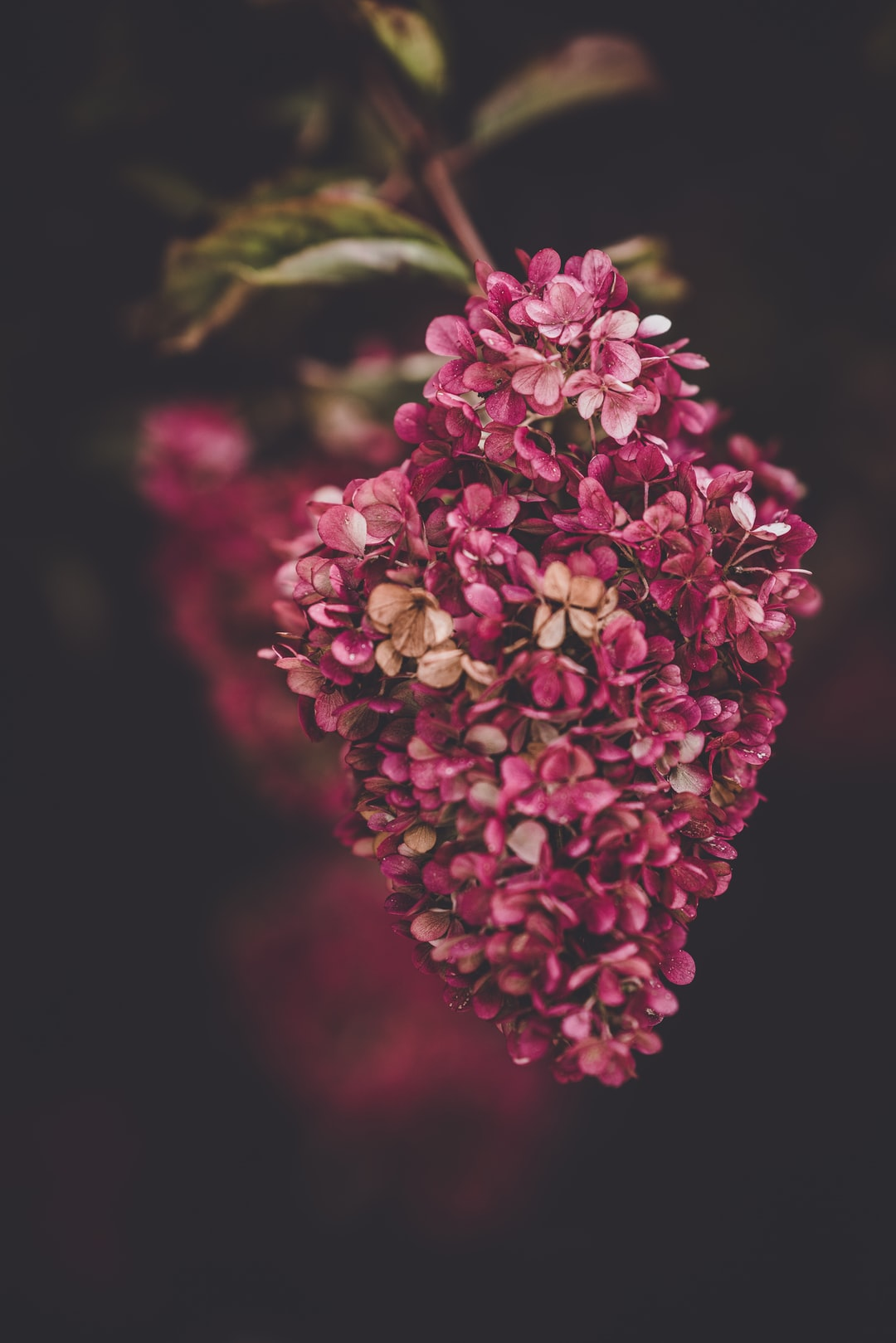 3874. Virágok