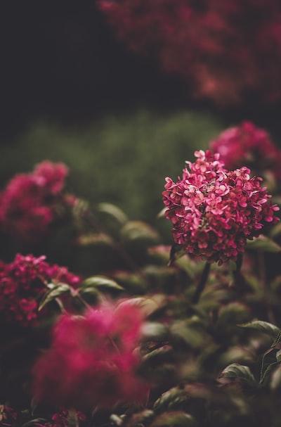 4803. Virágok