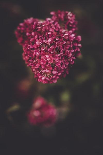 3957. Virágok