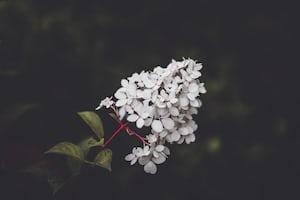 3993. Virágok