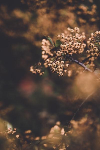 3978. Virágok