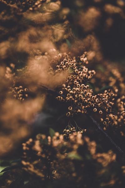 3881. Virágok