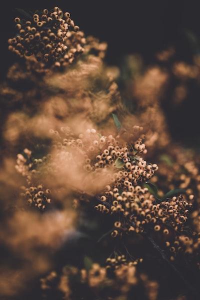 3991. Virágok