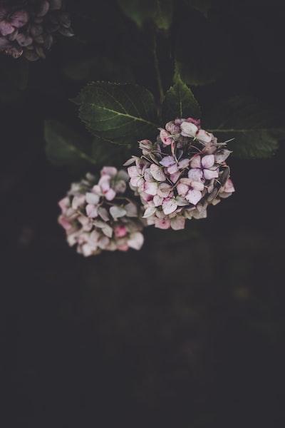3908. Virágok