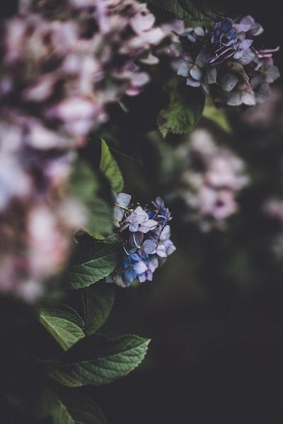 3922. Virágok