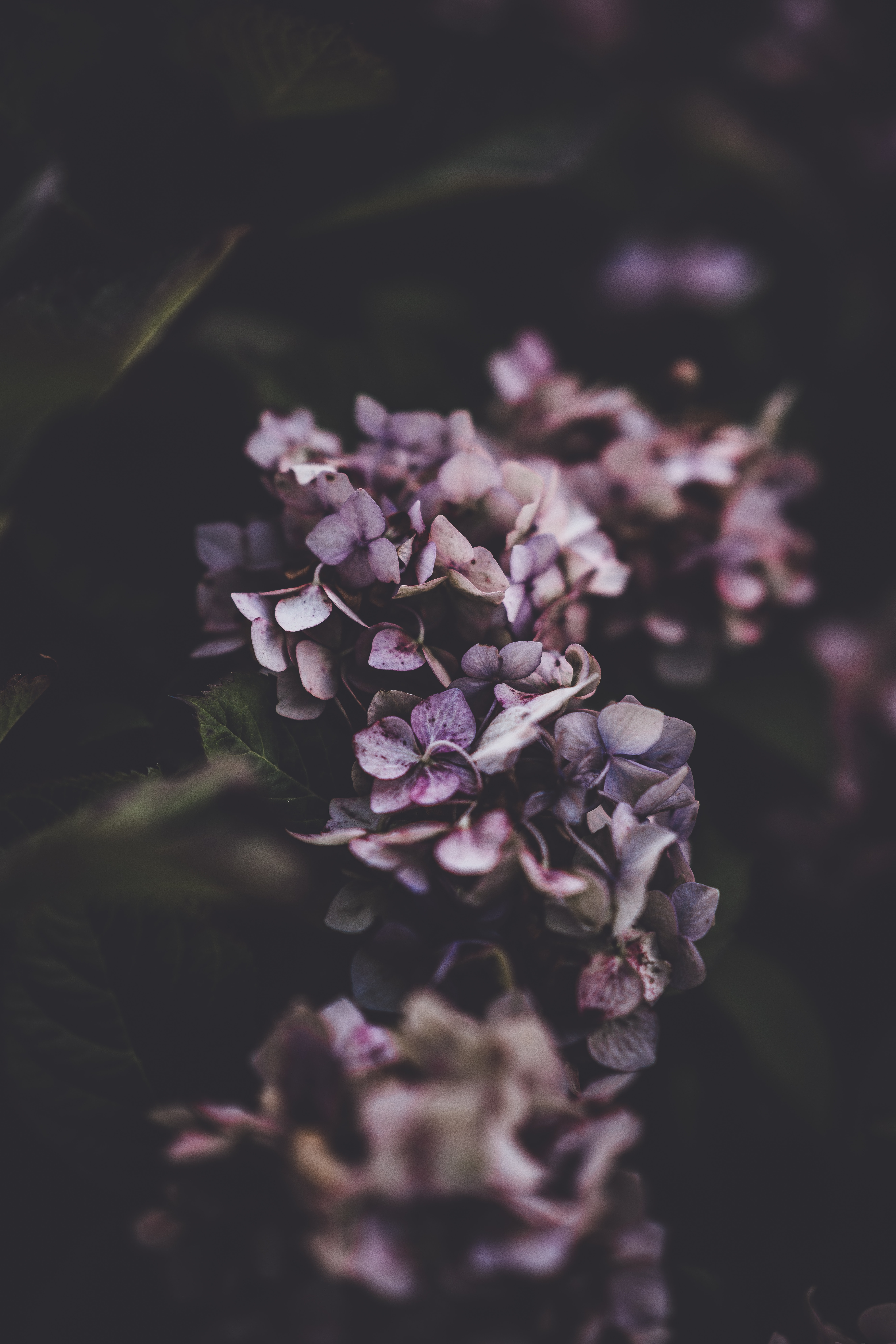 close-0up photography of purple petaled flowers