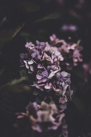3885. Virágok