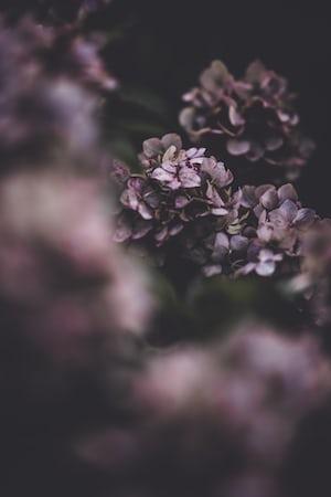 3904. Virágok