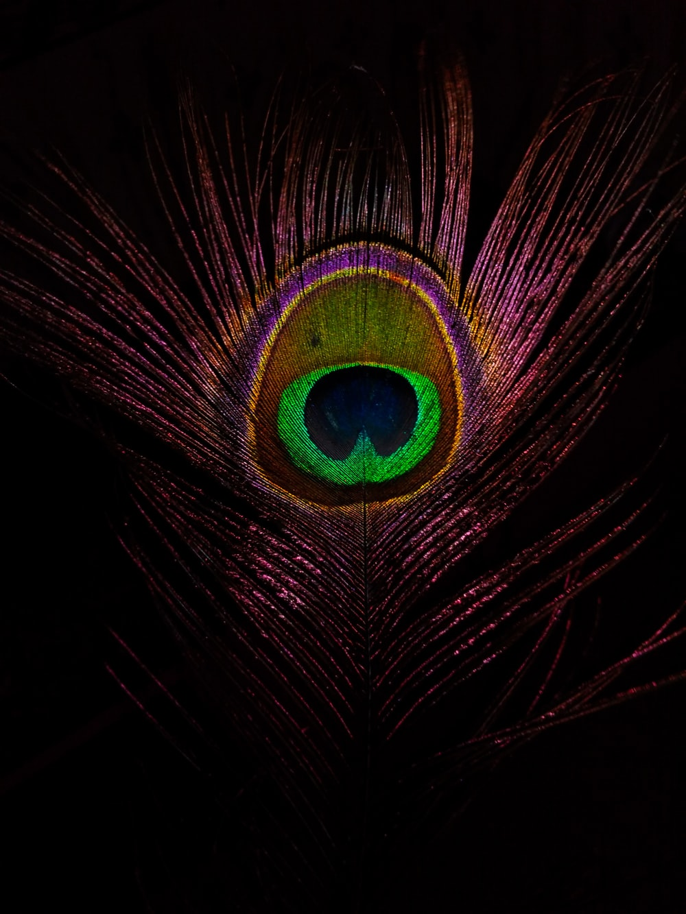closeup photo of green and purple feather