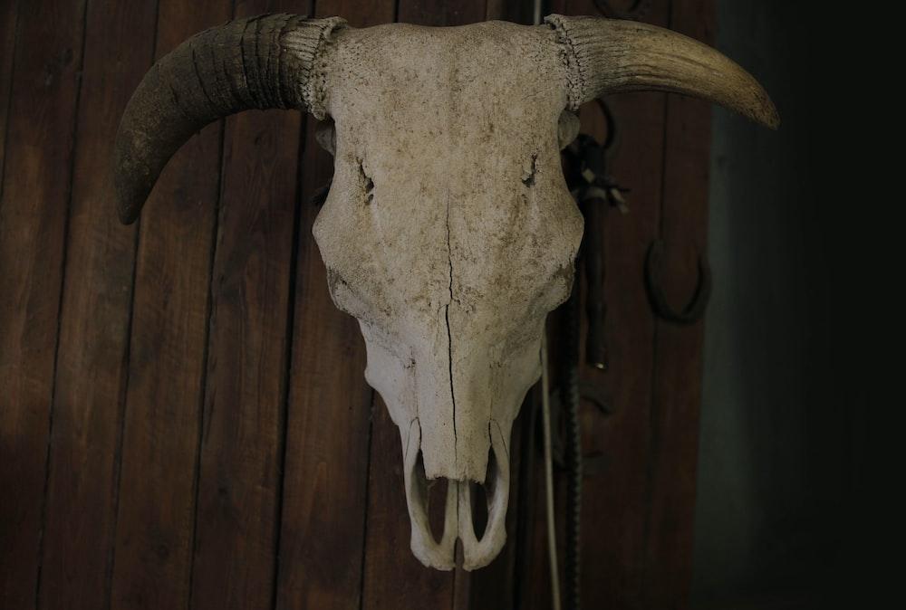 animal skull on wooden surface
