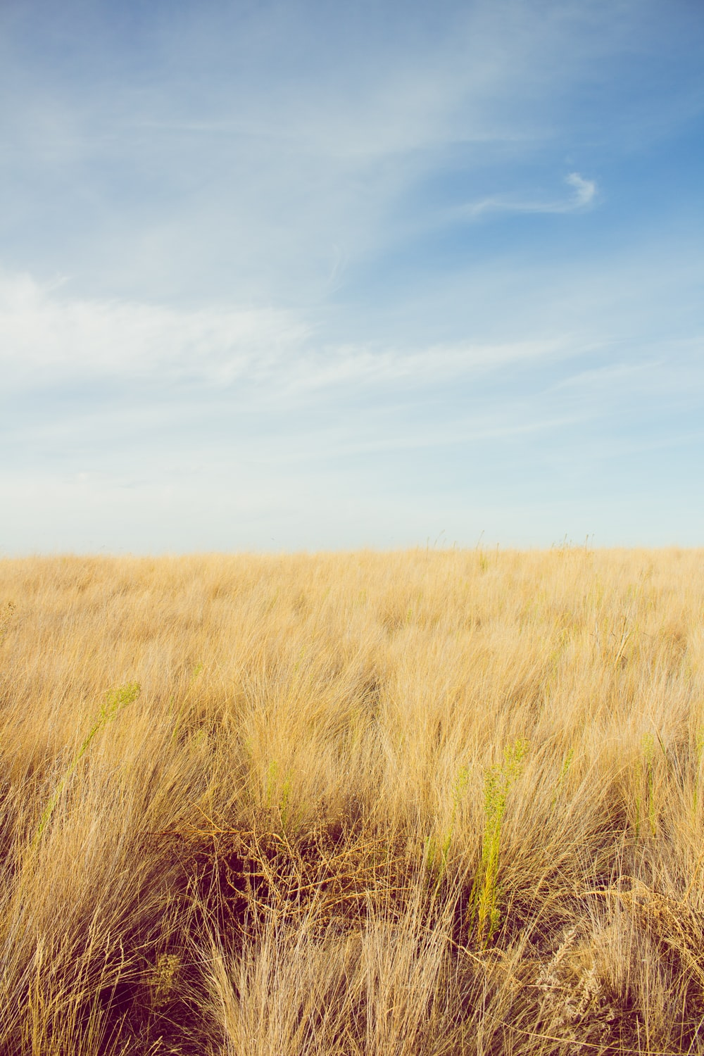 photo of brown grass field under cloudy sky