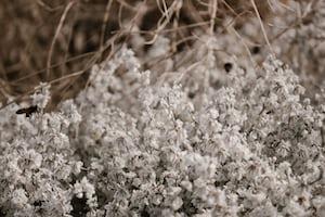 3974. Virágok