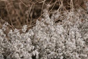 3869. Virágok