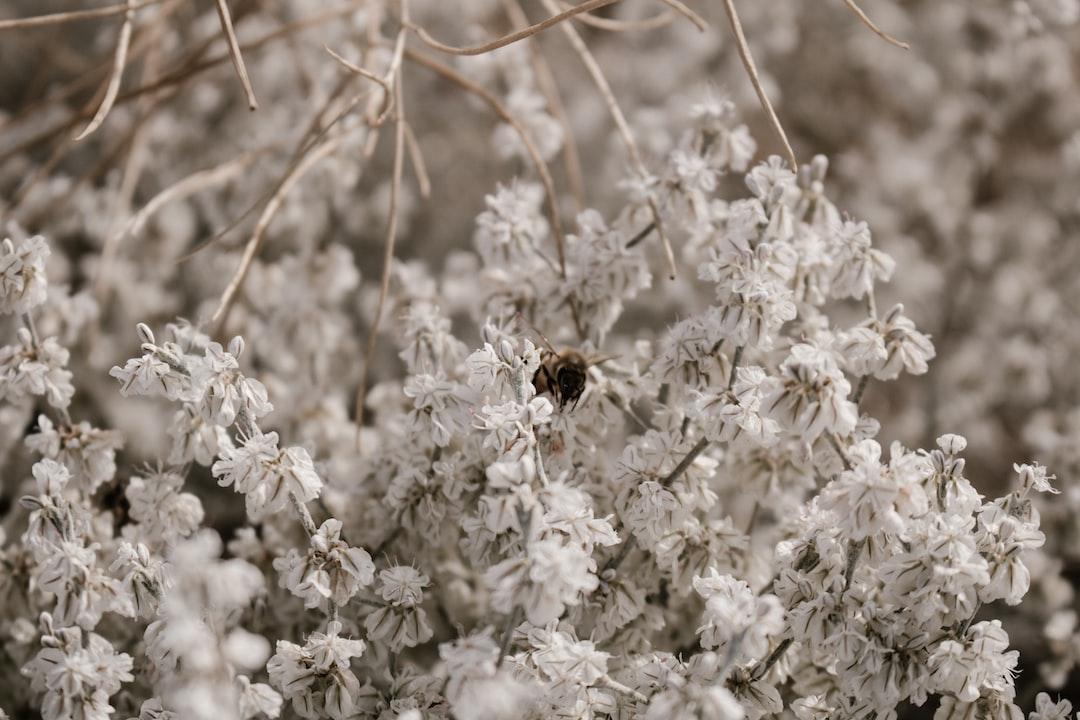 4785. Virágok