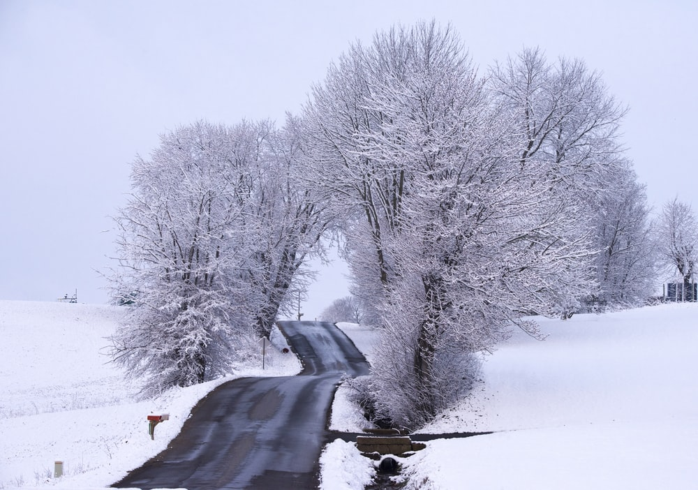 snow covered bare trees near road