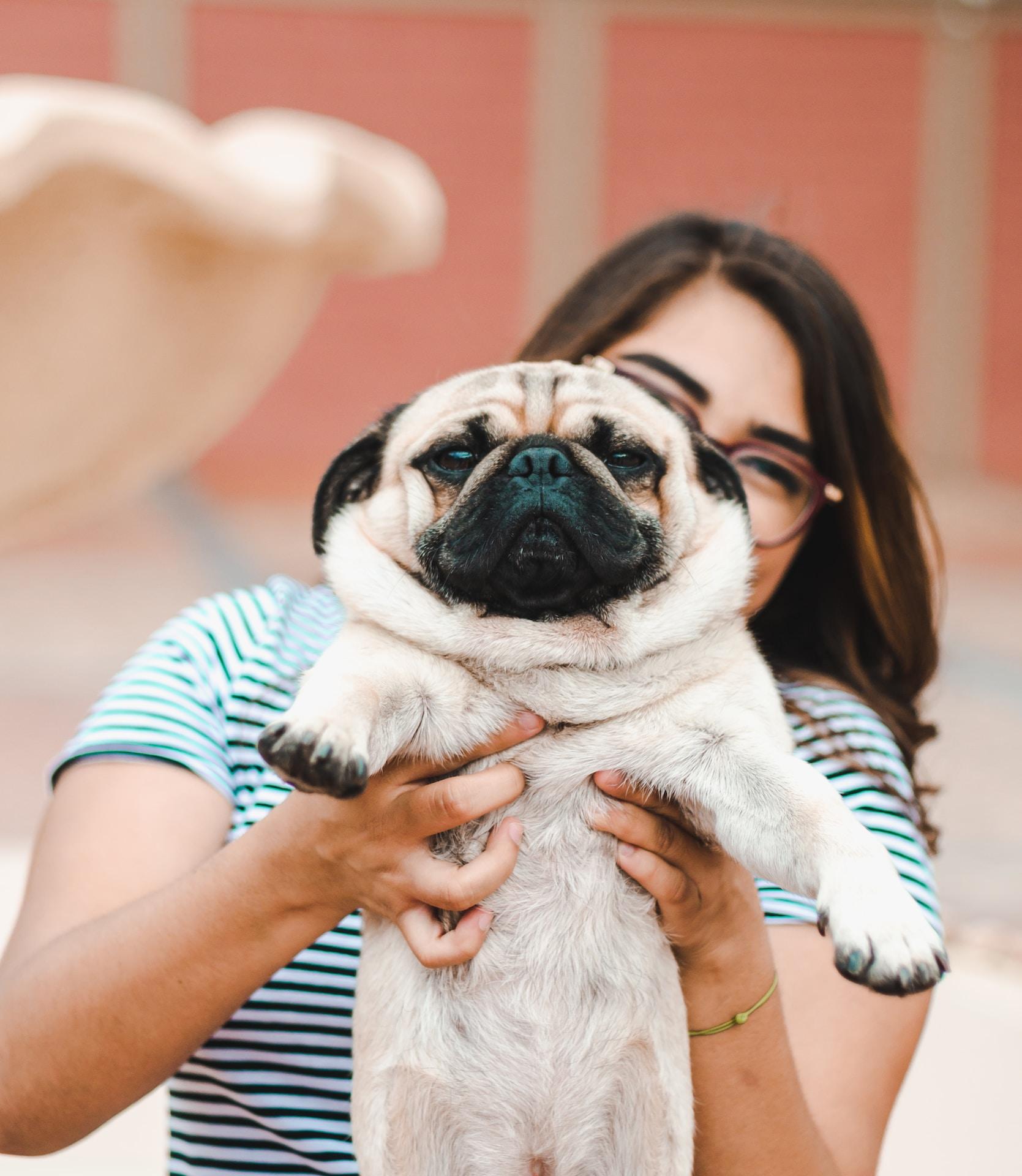 woman holding Pug puppy