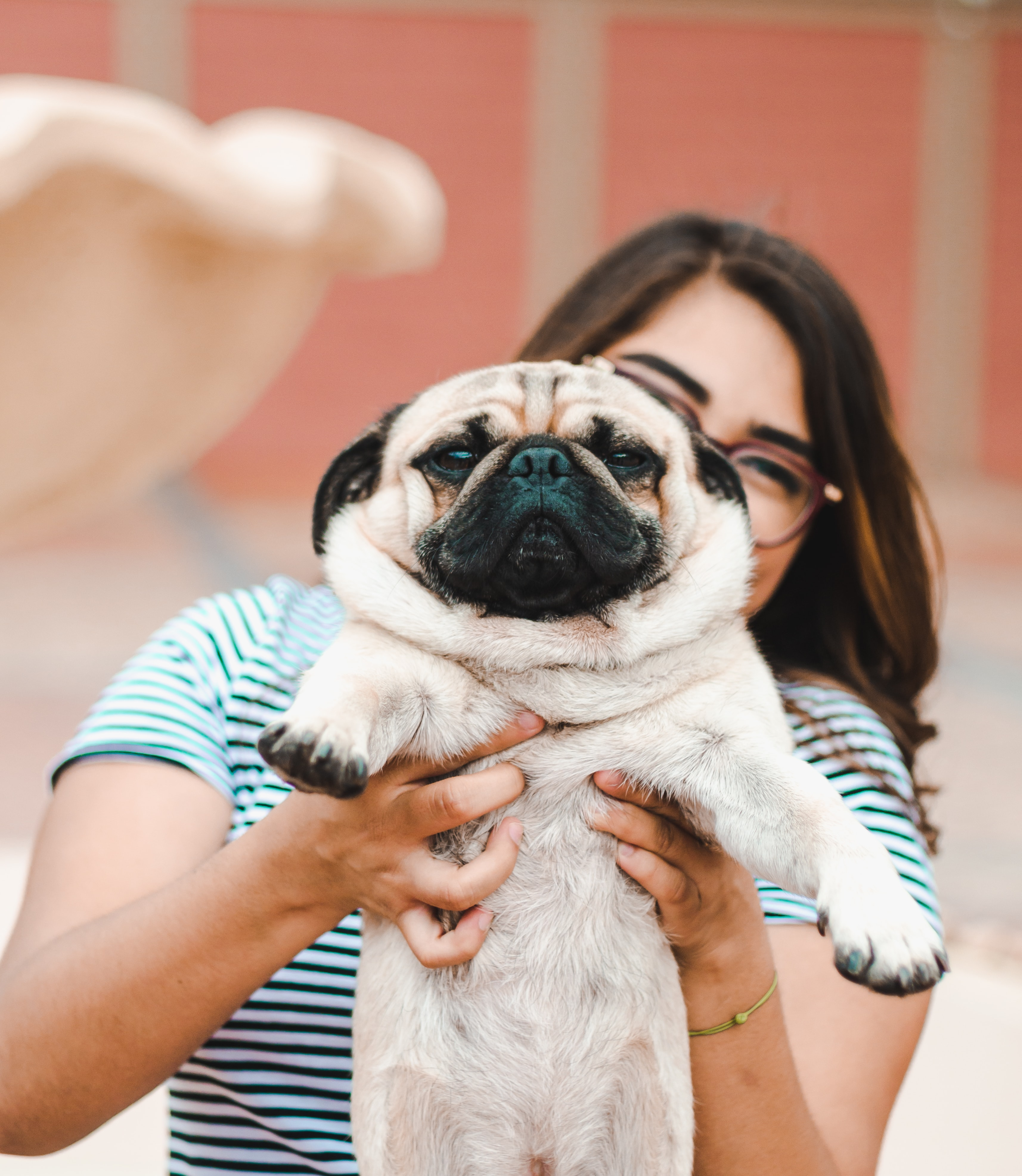 woman holding Pug puppy
