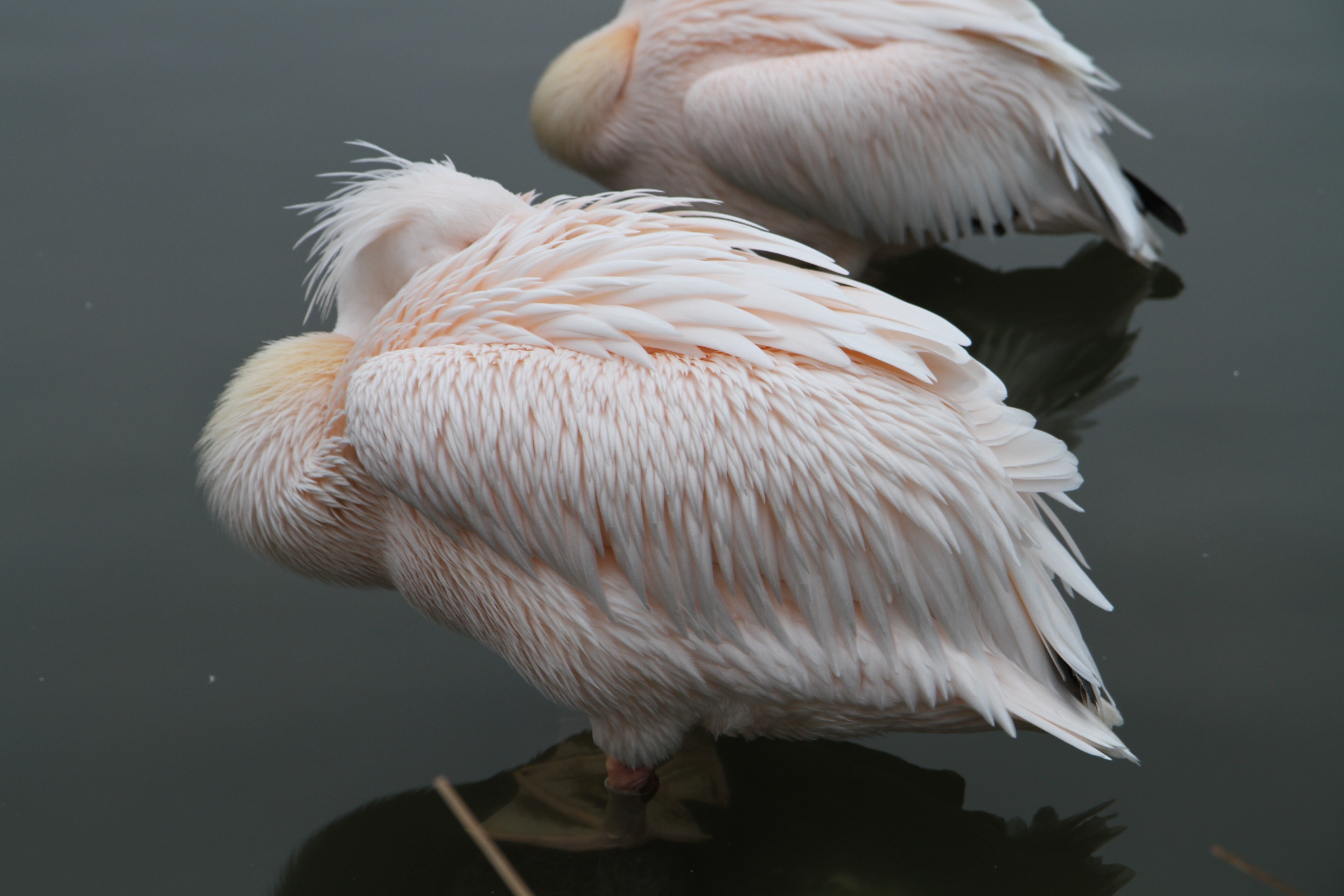 two white birds on body of water at daytime