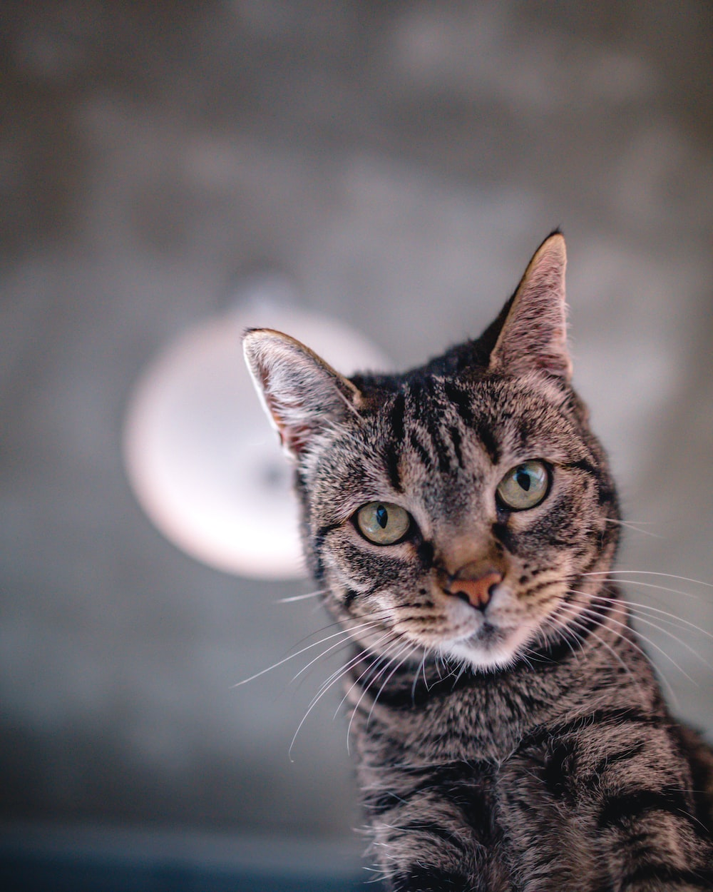 brown tabby cat looking up