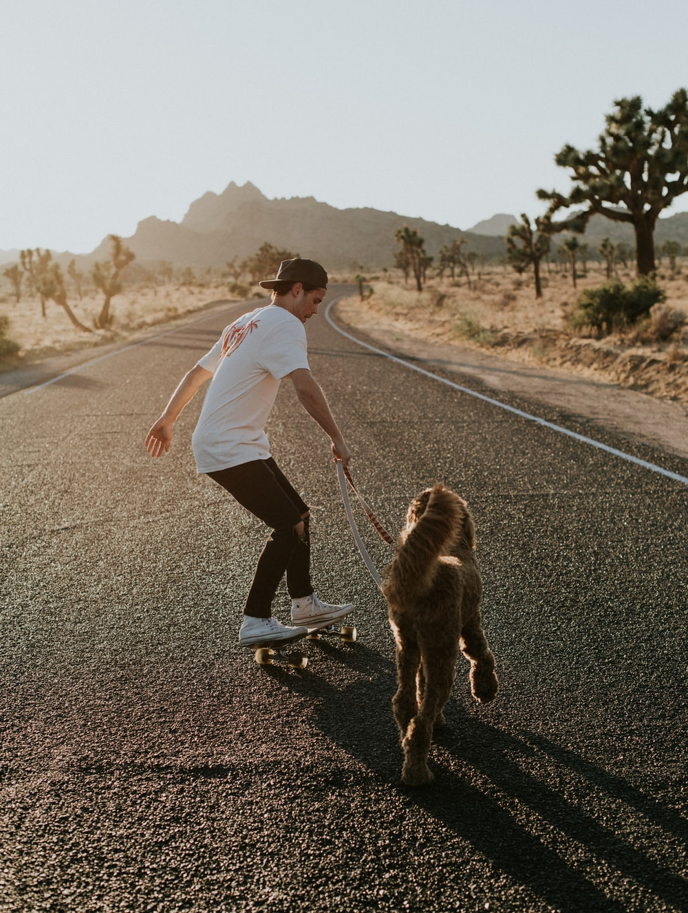 man in skateboard walking dog during daytime