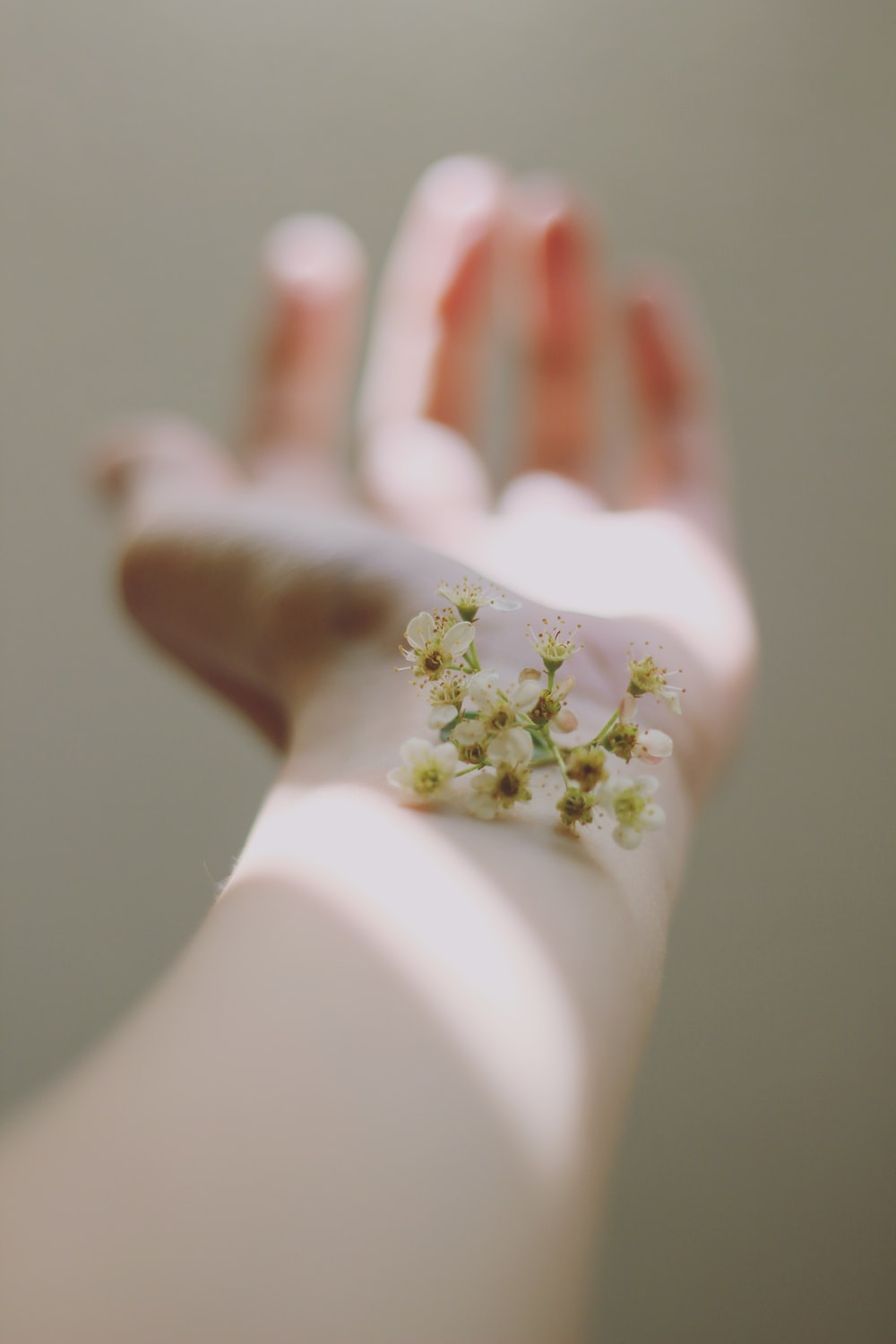 selective focus photography of white clustered flowers on left human hand