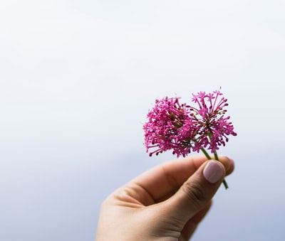 selective focus photo of person holding pink petaled flower amalfi coast zoom background