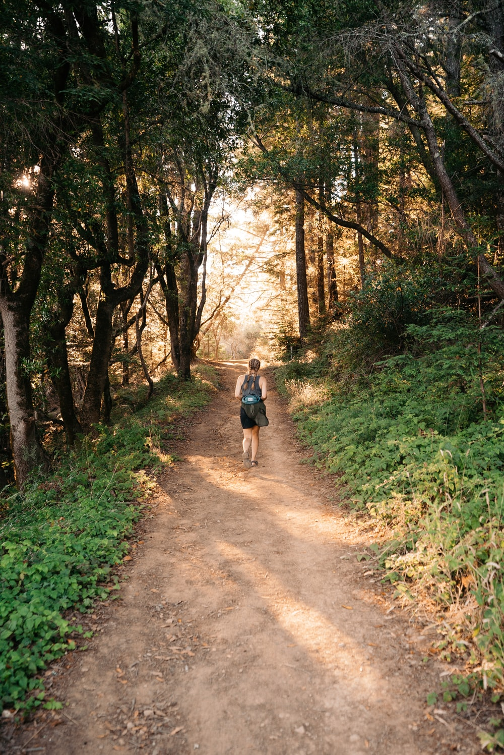 woman walking on pathway between tall trees at daytime