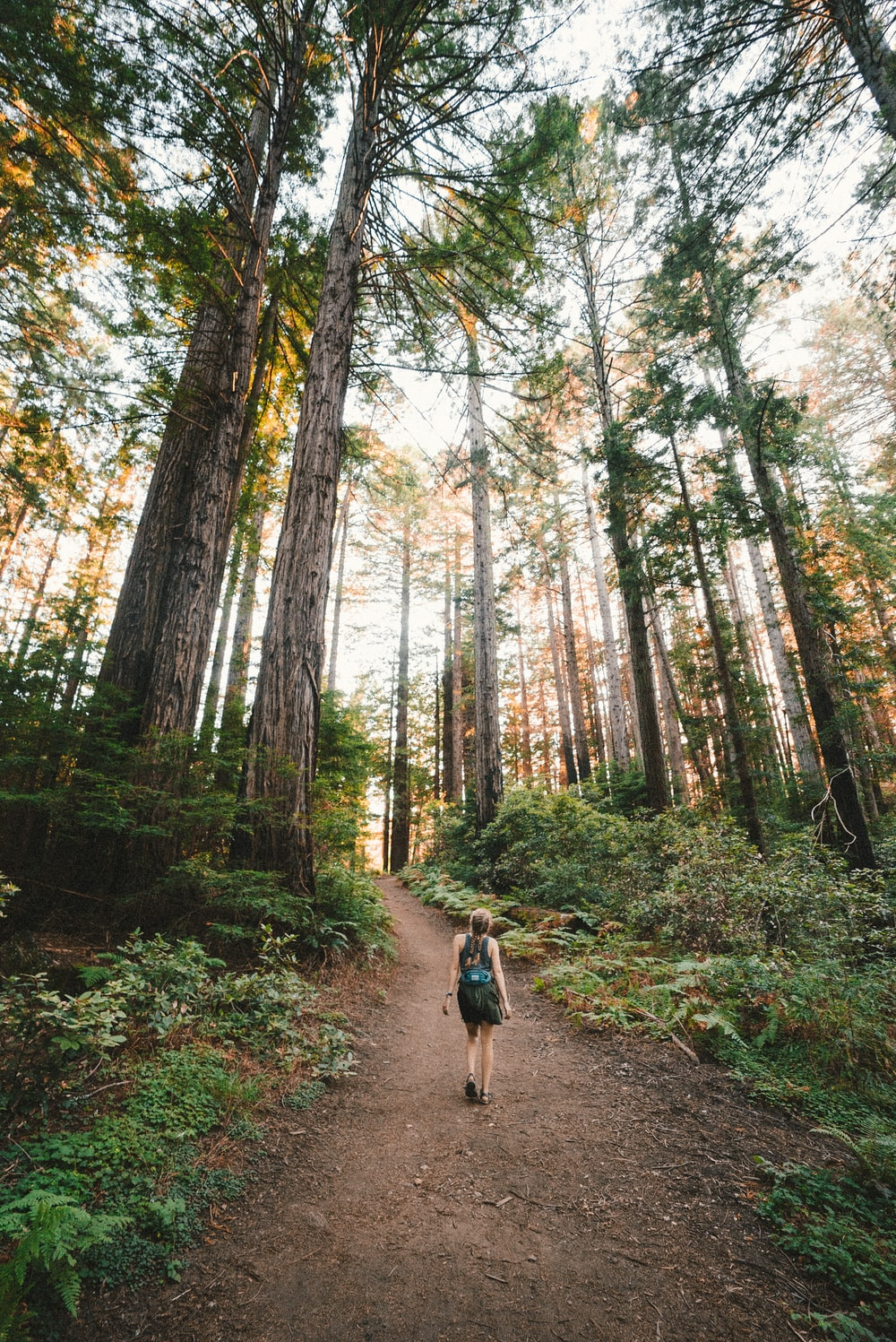 woman walking near plants and tall trees during daytime