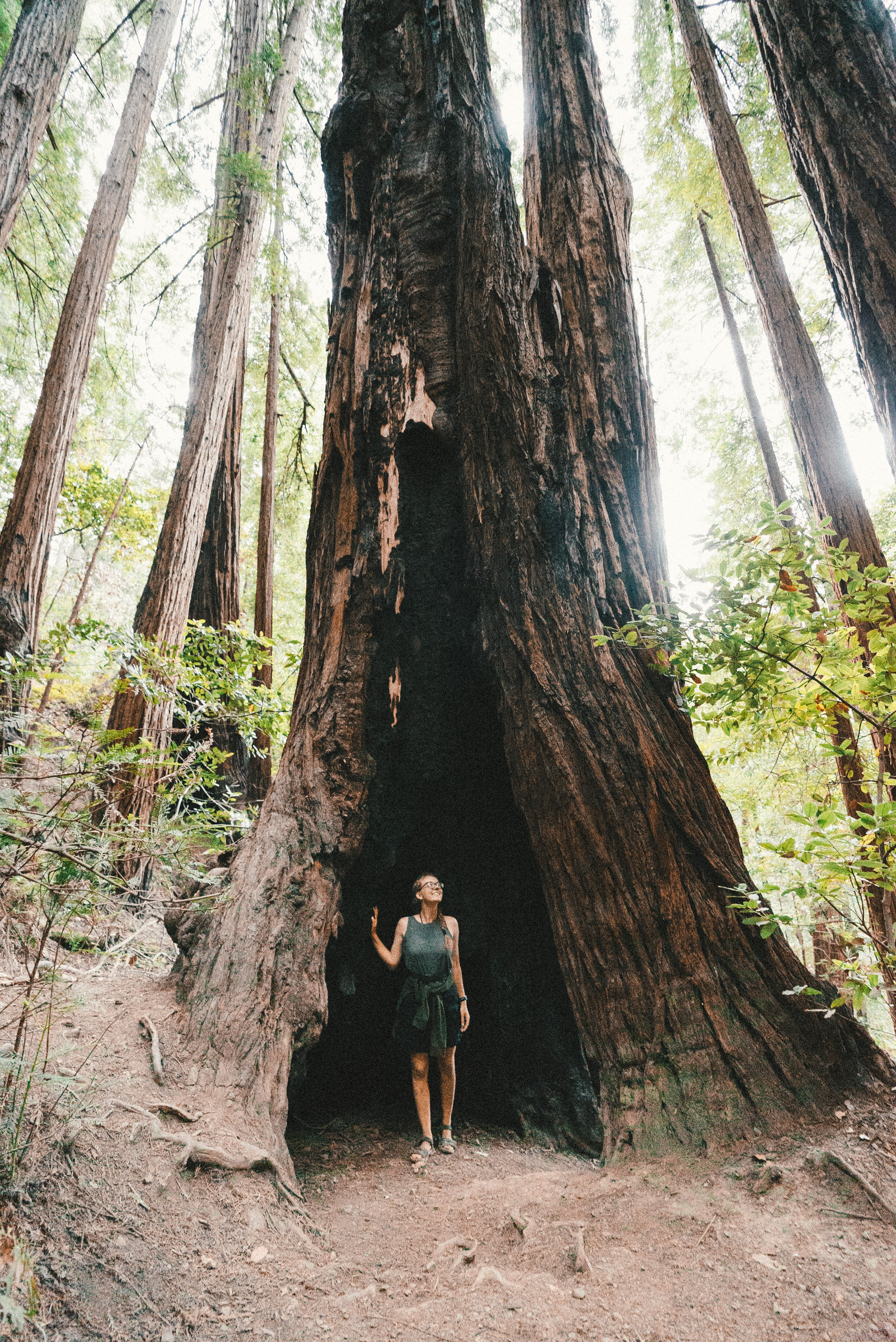 woman standing under tree branch on focus photo