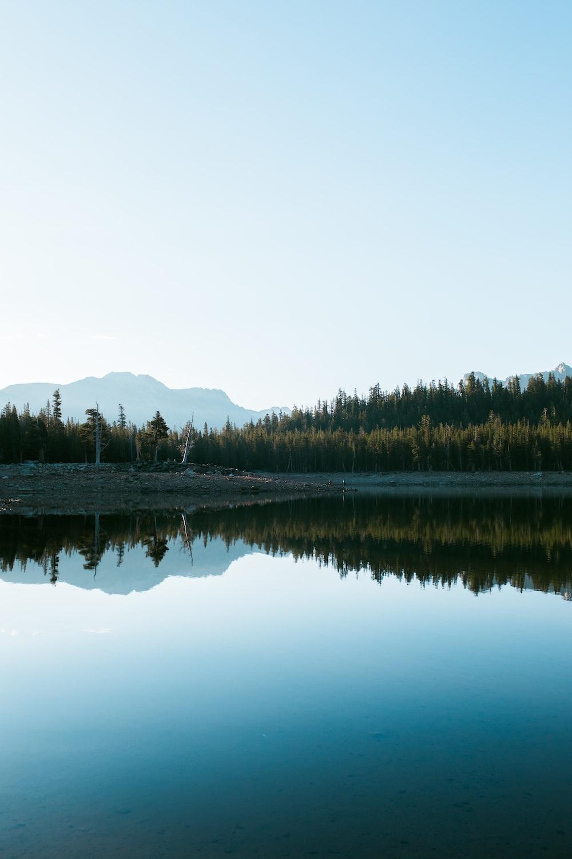 body of water between trees