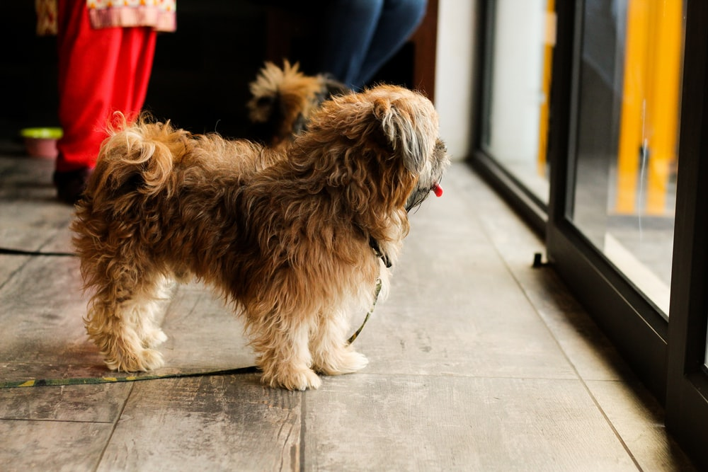 selective focus photography of long-coated brown dog standing near sliding door