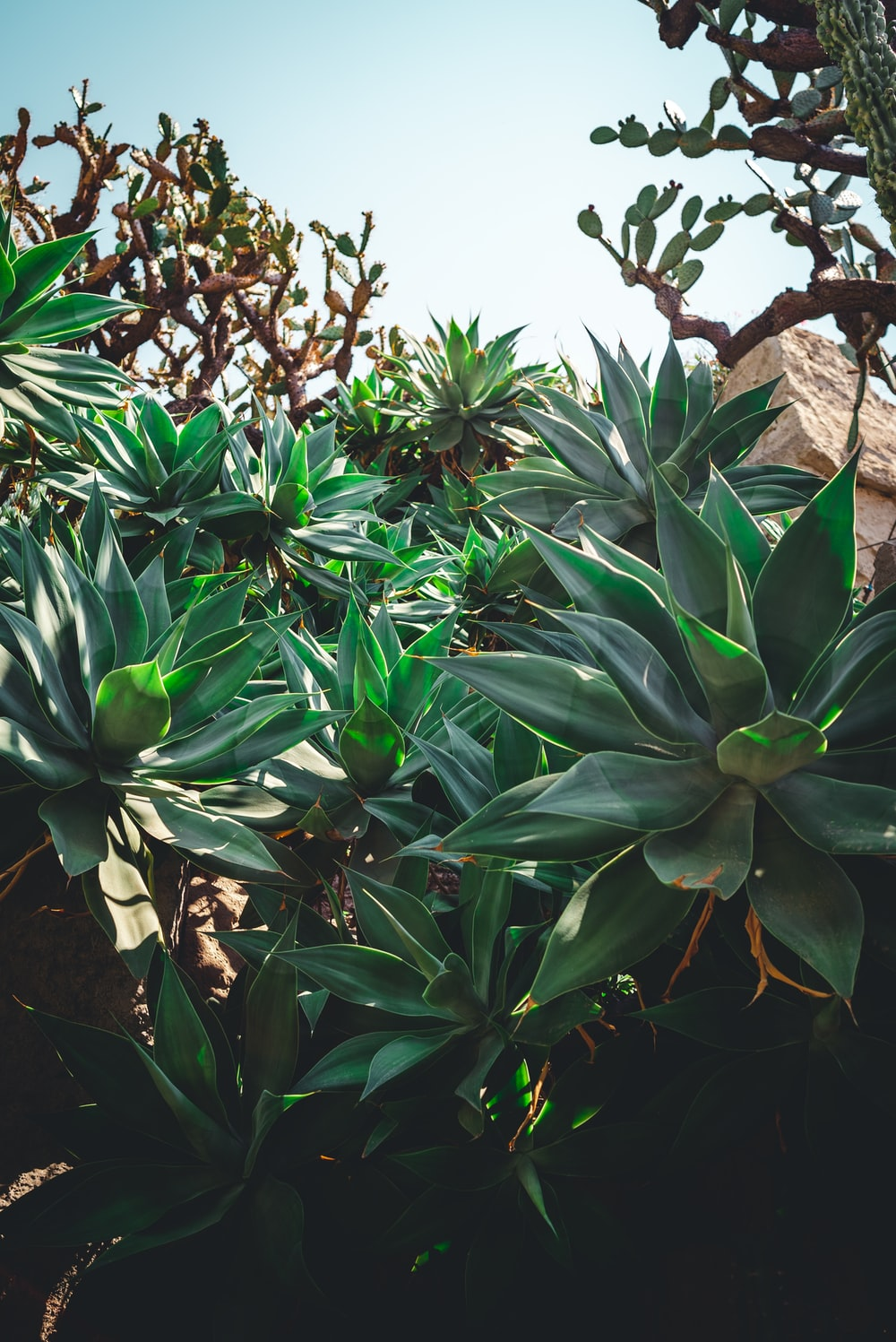 shallow focus of green plants