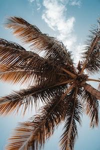 low-angle photo of coconut tree