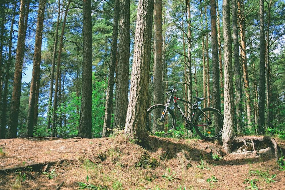 black mountain bike in forest